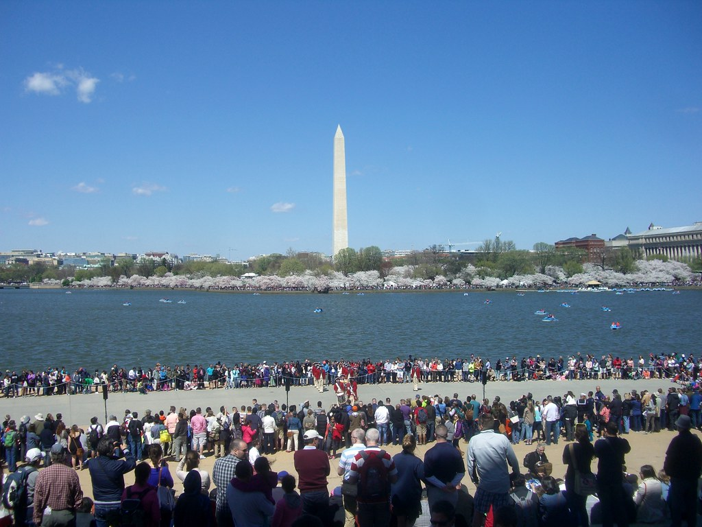 Washington monument the crowds and cherry blossoms
