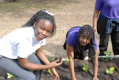 Miller Grove students inspecting the plants as they go into the soil. NRCS photo.
