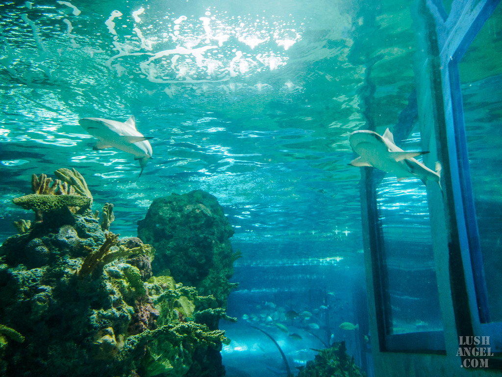 boracay-oceanarium