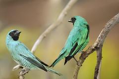 THVN_Humming Birds