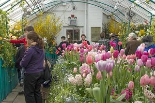 Smith Spring Bulb Show