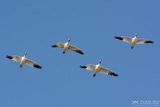 Pattern Flight