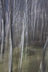 ICM trees