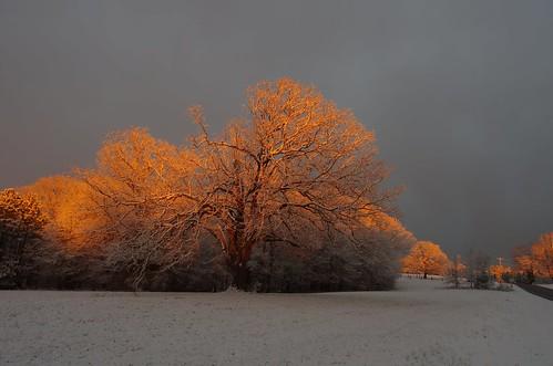 trees light sunset sunlight snow cold beautiful warm glow pentax near glowing f8 15mm k5ii