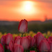 Spring Sunrise by egbphoto