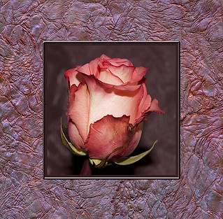 Textured Frame Rose Art