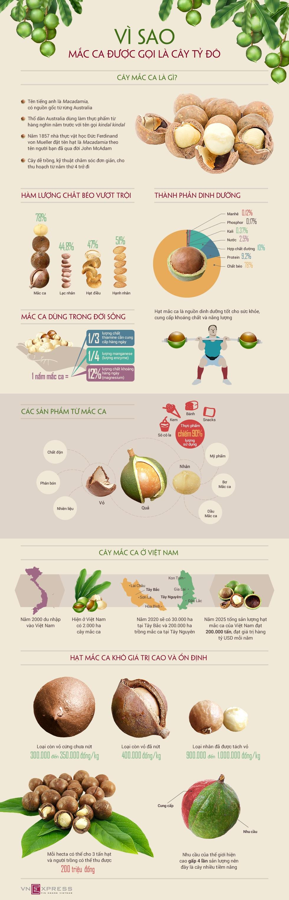 Infographic - Hạt Mắc-Ca