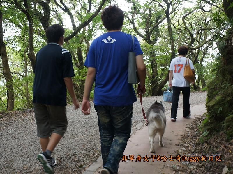 哈士奇Doggy2013陽明山二子坪23
