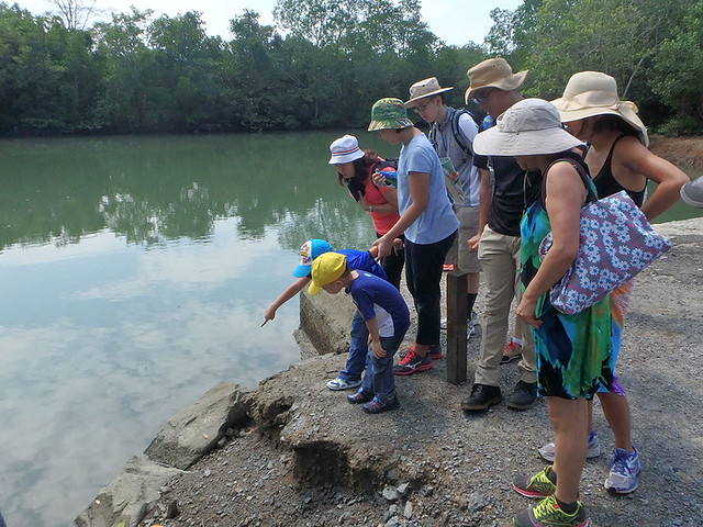 Free mangrove walk with Restore Ubin Mangroves (R.U.M.) Initiative