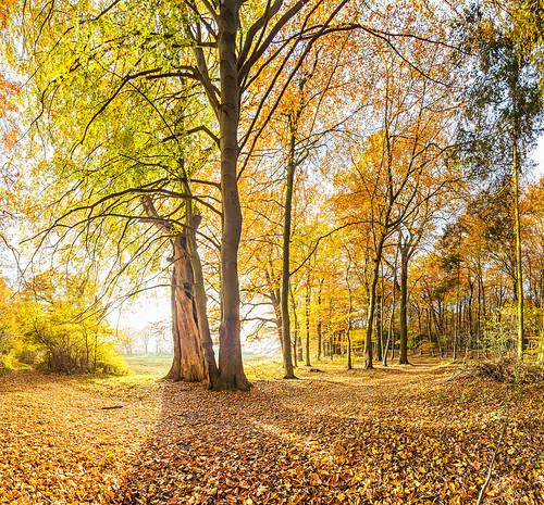 herbst IMG_0911-0929 Panorama-1