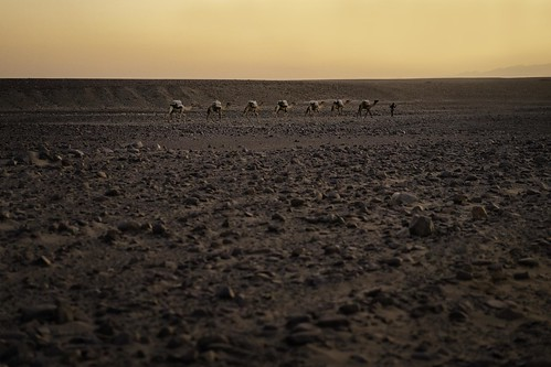 africa travel sunset hot animals rock landscape outside person desert sony traditional extreme dry camel 55mm heat caravan fe ethiopia alpha job a7 carry camelid danakildepression sonnartfe55mmf18zalens