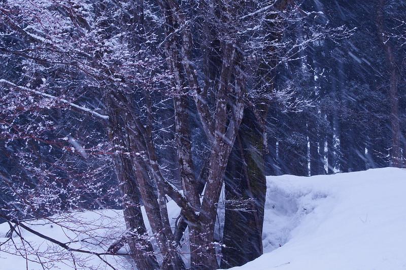 吹雪く_201503_NO1