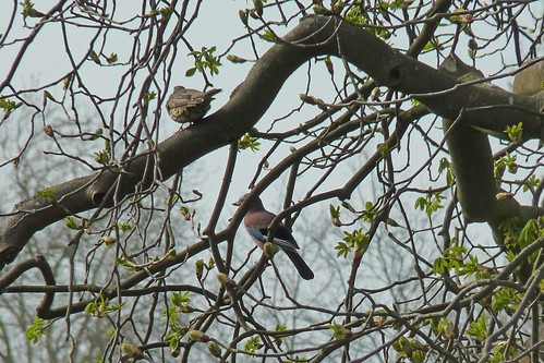 I spotted a Jay flying about near the river!