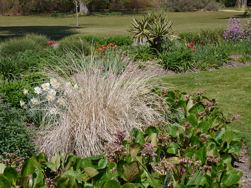 2015-04-23 Herbaceous Borders (24) © Dave Marsh