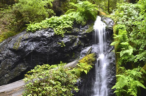 waterfall russiangulchstatepark happyearthdayferncanyon