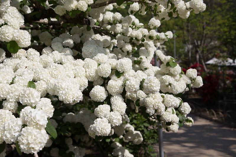 ashikaga_flowerpark-46