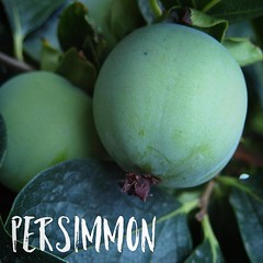 Persimmon in the Sicilian Garden #persimmon #food…