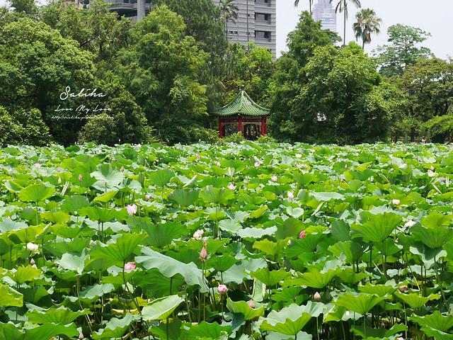 台北一日遊景點推薦植物園荷花蓮花池 (38)