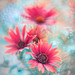PasteLove II by Magda Wasiczek Gardens and Plants Art Photography