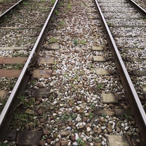 石の隙間から生える草 #都電pw2015