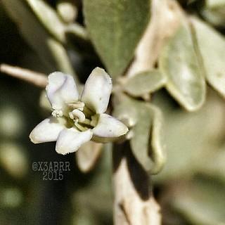 #flower #Rose #nature #plant #photography #photo #nature #flowers #صورة #زهور #ورد #bokeh