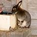 Thirsty Rabbit