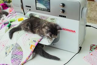 Bernina_Katzen_01_017_coated300
