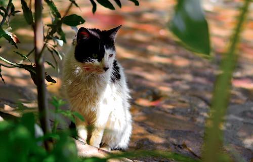 gato15