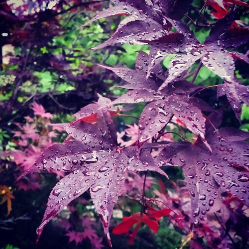 Rain. Blessed rain.