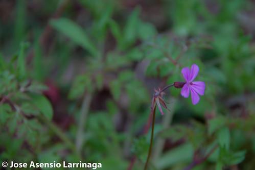 Primavera 2015 #DePaseoConLarri #Flickr -037