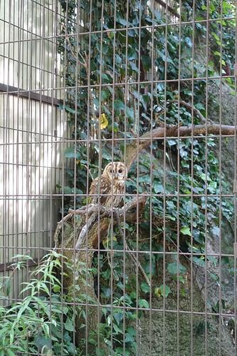 M nagerie du jardin des plantes - Zoo du jardin des plantes tarifs ...