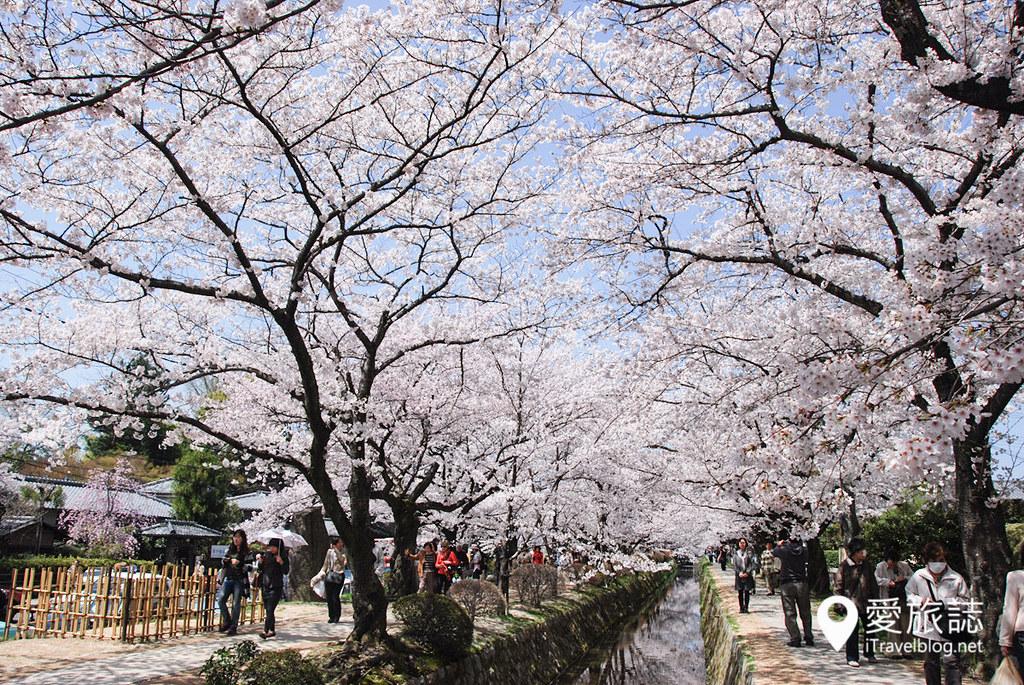 京都赏樱景点 哲学之道 11