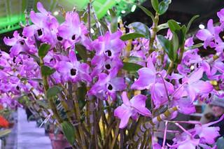 FlowerShow2015_0129