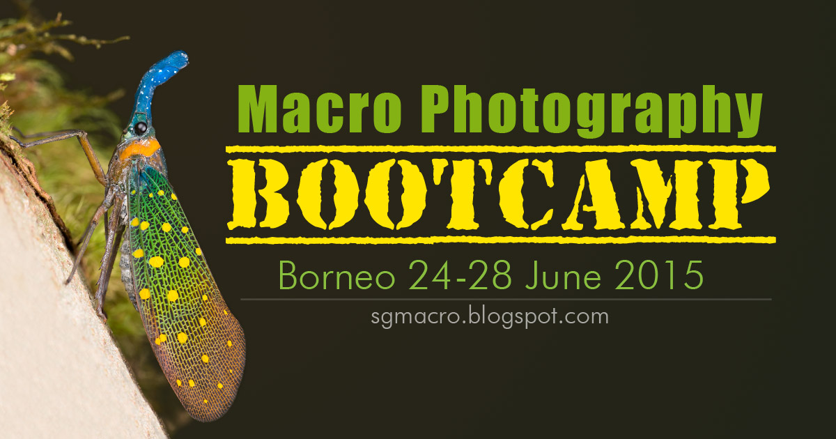 Macro Photography Bootcamp Borneo 2015