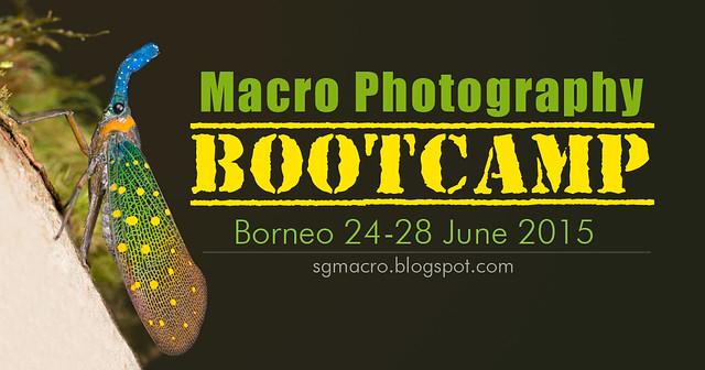 Macro Photography Bootcamp Borneo 2015
