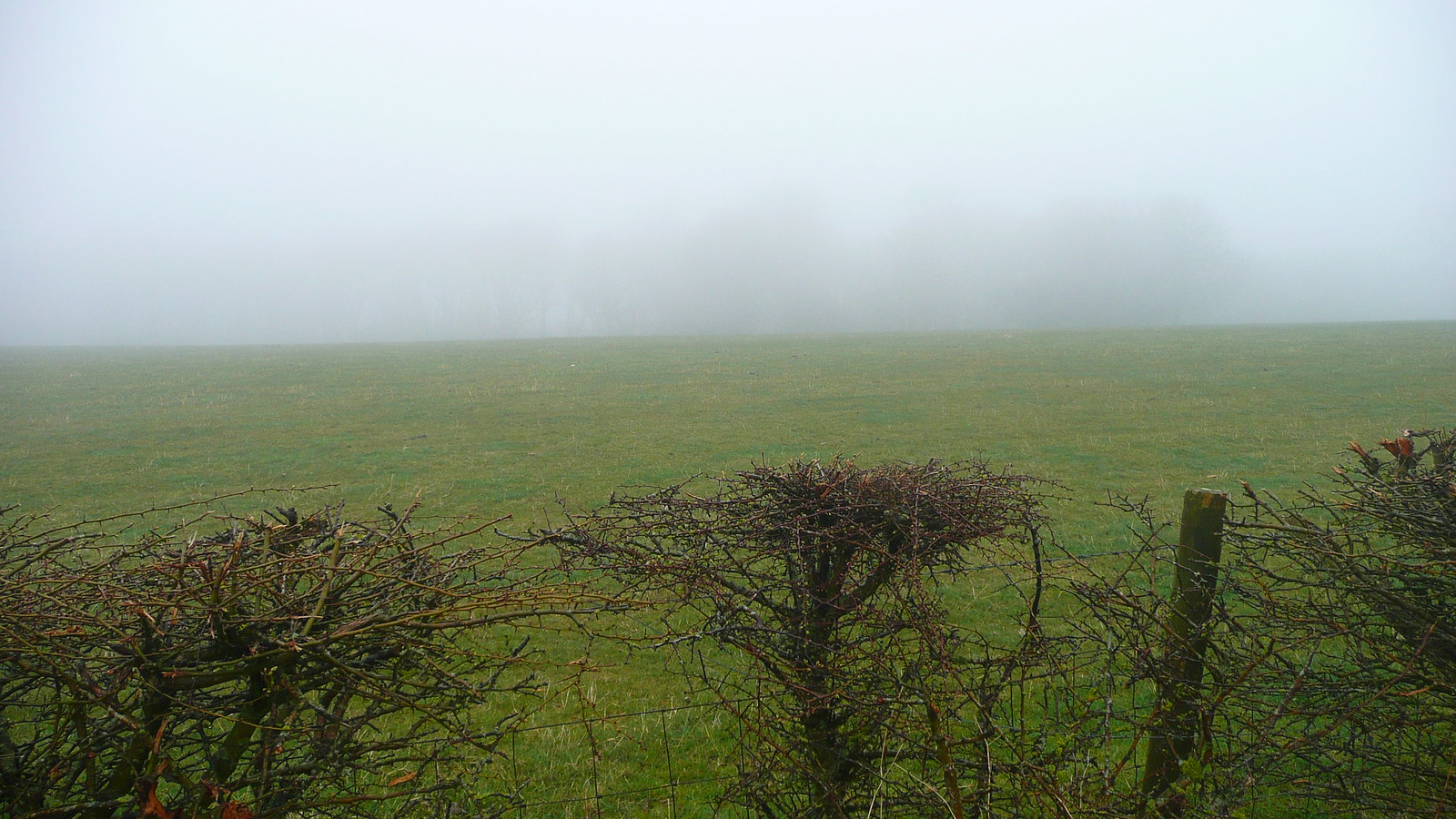 Trees in the distance Views of the South Downs (28th March 2015, low cloud, gales)