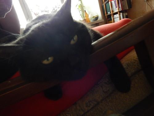 черный кот Муся лежит в кресле | horoshogromko.ru
