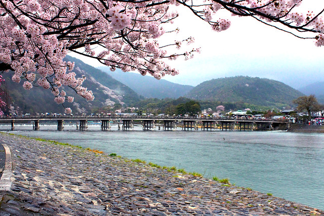 Sakura in Arashiyama, Kyoto 2015