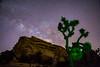 Joshua Tree Under The Milky Way
