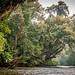 Travel into the heart of the rainforest by zoomleeuwtje