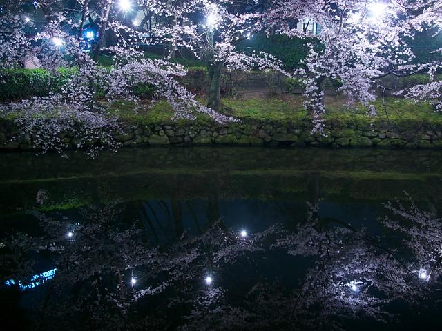 150329_OkazakiNightSakura 13