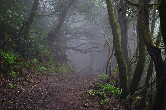 Laurisilva Forest, Cruz del Carmen, Tenerife