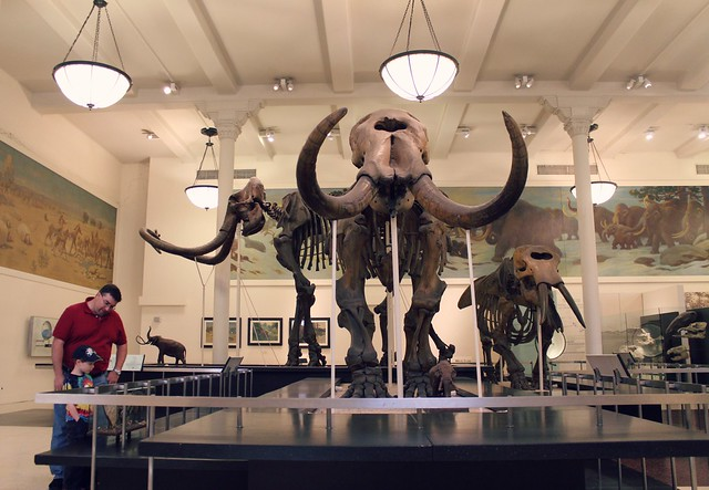Museu - Museum Week