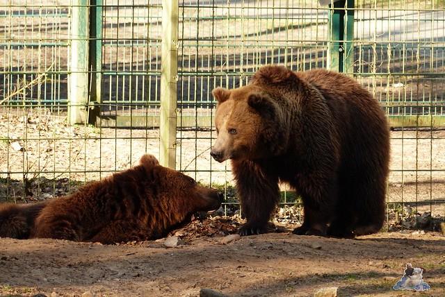 Zoo Eberswalde 22.03.2015   304