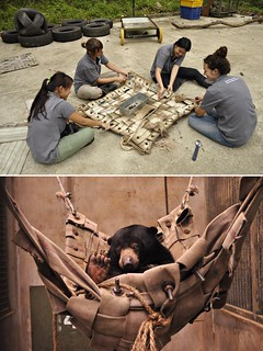 志工正在製作吊床,增加馬來熊環境豐富度。照片由Bornean Sun Bear Conservation Centre (BSBCC) 提供