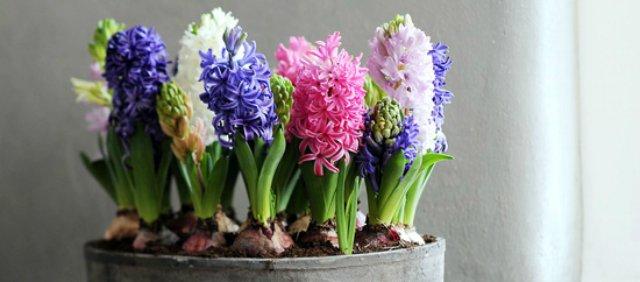 Lo dice la nasa estas son las plantas de interior que debes elegir seg n tu casa o departamento - Alegria planta cuidados ...