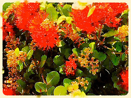 Bottle Brush Plant Edited in Waterlogue Photo App Using the Travelogue Style