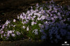 April exits. May enters. Ohio garden sanctuary.