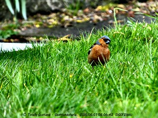 Bird in Lochaline, May 2015 1/2