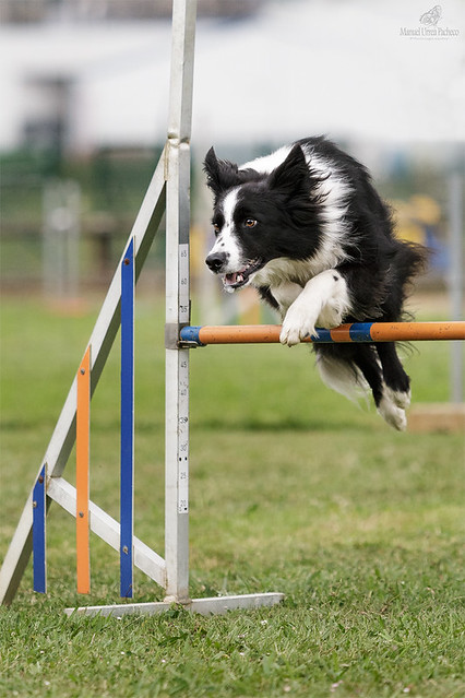Agility Is Fun 2